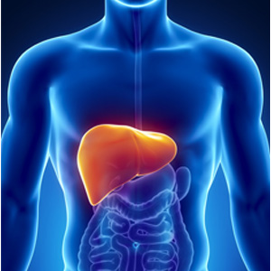 Human Body Systems - Liver Facts